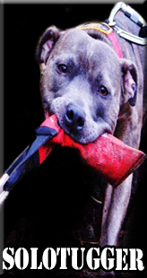 The Solo Tugger made by extreme dog gear